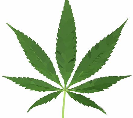 marijuana weed pot